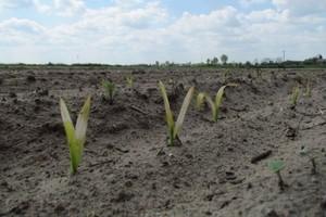 Rolnicy ze szkodami w gospodarstwach skorzystają z unijnych pieniędzy