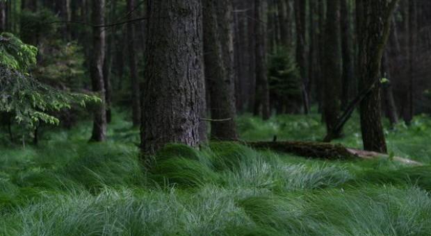 ARiMR: Od 1 czerwca wnioski na zalesienia