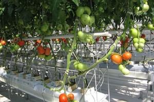 Rewolucja w uprawie szklarniowej