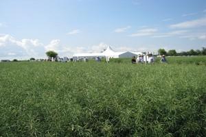 Clearfield połączy nasiennictwo hybrydowe z ochroną roślin