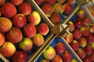 Jabłka pod specjalnym nadzorem