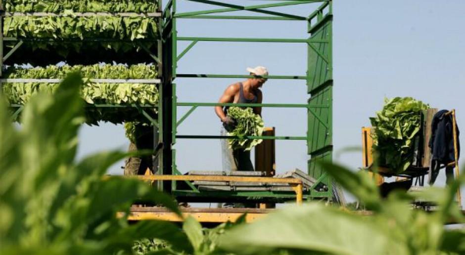 Rzeczpospolita: Koniec świata plantatorów tytoniu