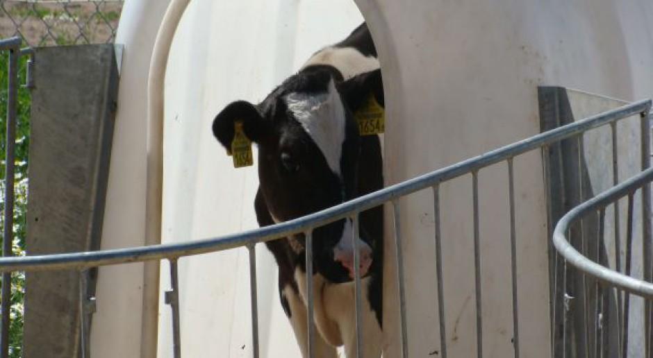 Ile mleka w mleku?
