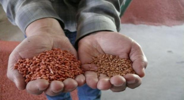 Dwa kierunki zmian opłaty hodowlanej