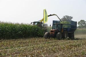 Sieczkarnie wyjechały już na pola kukurydzy