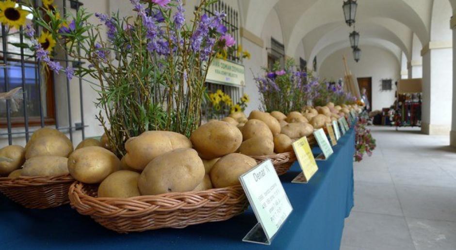 Michalina najsmaczniejszym ziemniakiem - zdecydowali mieszkańcy stolicy