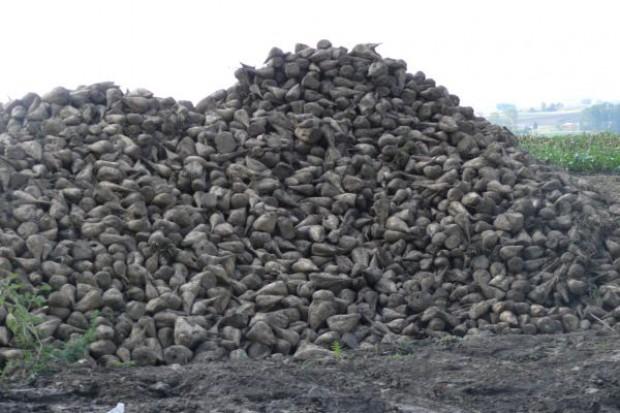 Propozycja legislacyjna KE w sprawie cukru oburzyła plantatorów buraków