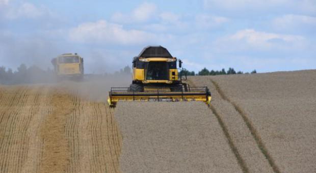 Strategie Grains podwyższyła szacunek zbiorów zbóż w UE