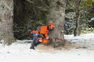 Wypadek w lesie: Kiedy przysługuje odszkodowanie?