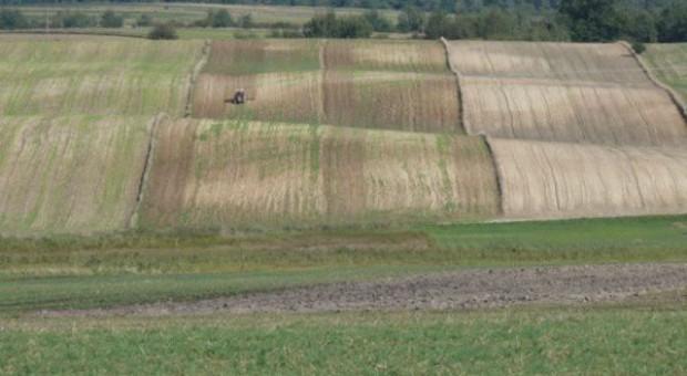 GUS: zmniejszyła się powierzchnia gruntów należących do gospodarstw rolnych