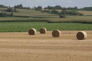Dynamika światowej produkcji zbóż obniżona