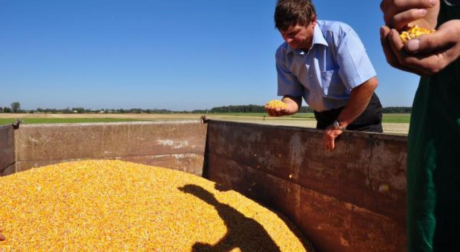 Uchylony zakaz uprawy GMO