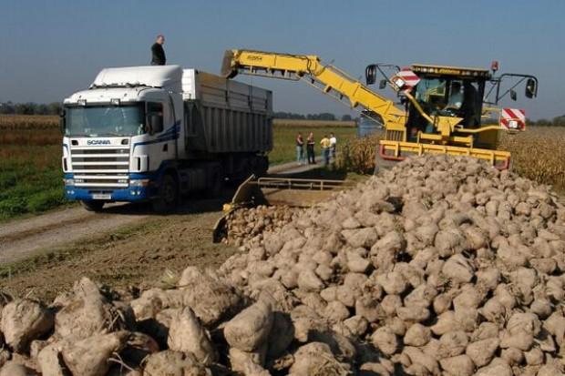 """Rolnicy """"oskubią"""" cukrownie - wezmą nawet 30 mln euro"""