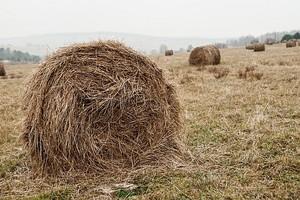 Zróżnicowanie powiązań gospodarstw rolniczych z otoczeniem