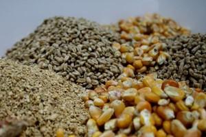 Nowoczesna koncepcja żywienia drobiu