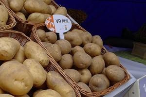 8 nowych odmian ziemniaka w rejestrze