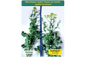 Syngenta: Toprex z pomocą rzepakowi