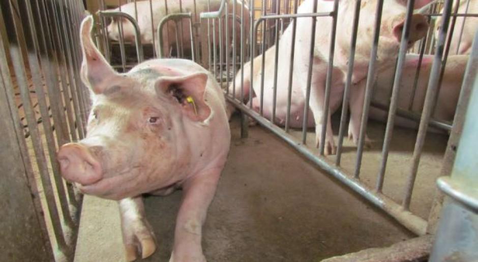 Rosjanie nie chcą unijnych zwierząt - wprowadzają zakaz importu