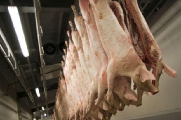Rosja może zablokować europejską wieprzowinę