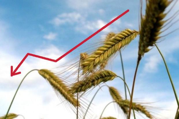 Silne spadki cen zbóż w Chicago
