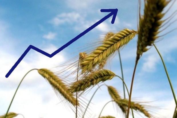 Rosną ceny surowców rolnych na giełdzie Matif