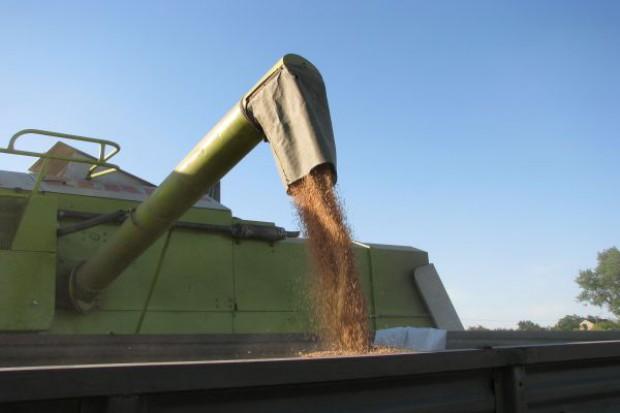 Bilans zbóż nie taki zły