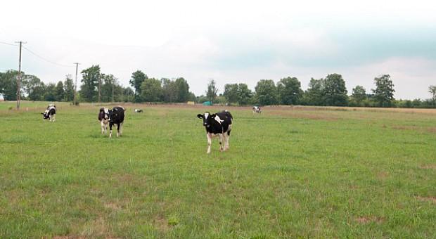 Trzeba tworzyć dobry klimat wokół rolnictwa ekologicznego