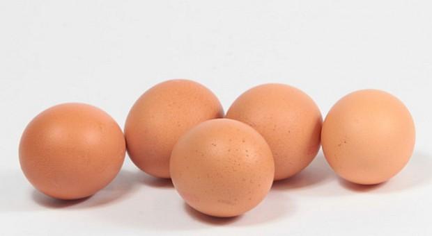 Tanieją jajka przemysłowe