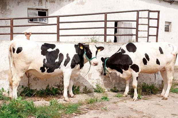 Mleko polskie tańsze niż w Unii