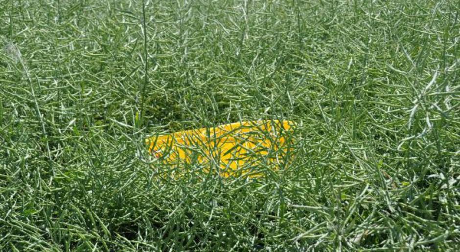 Żółte naczynia – pomiar szkodliwości