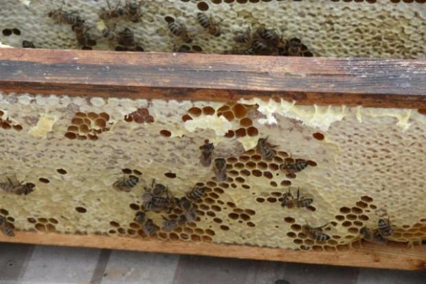 W obronie pszczół i zdrowego rozsądku