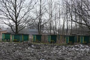 Posłowie chcą zwrócić uwagę rządu na problemy pszczelarzy