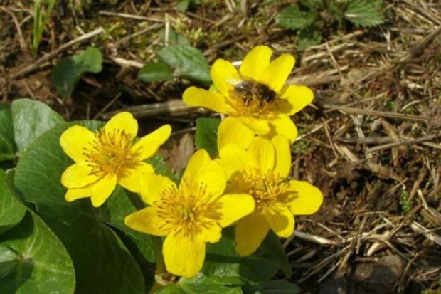 Gorący syndrom ginięcia pszczół