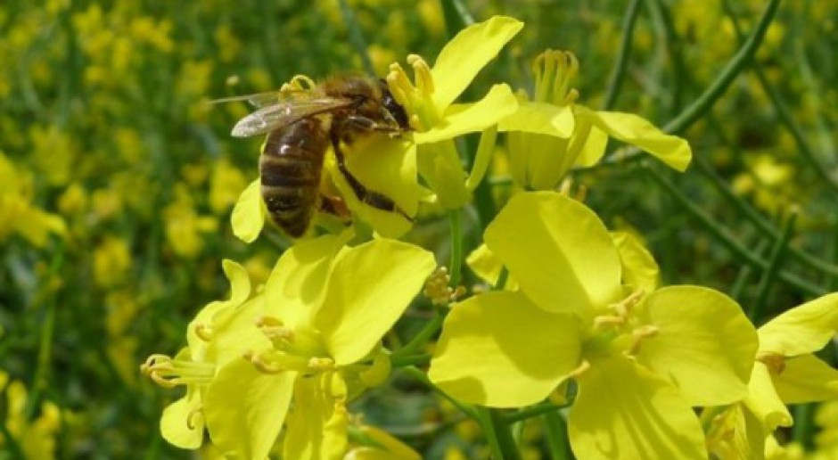 Dramat z pszczołami