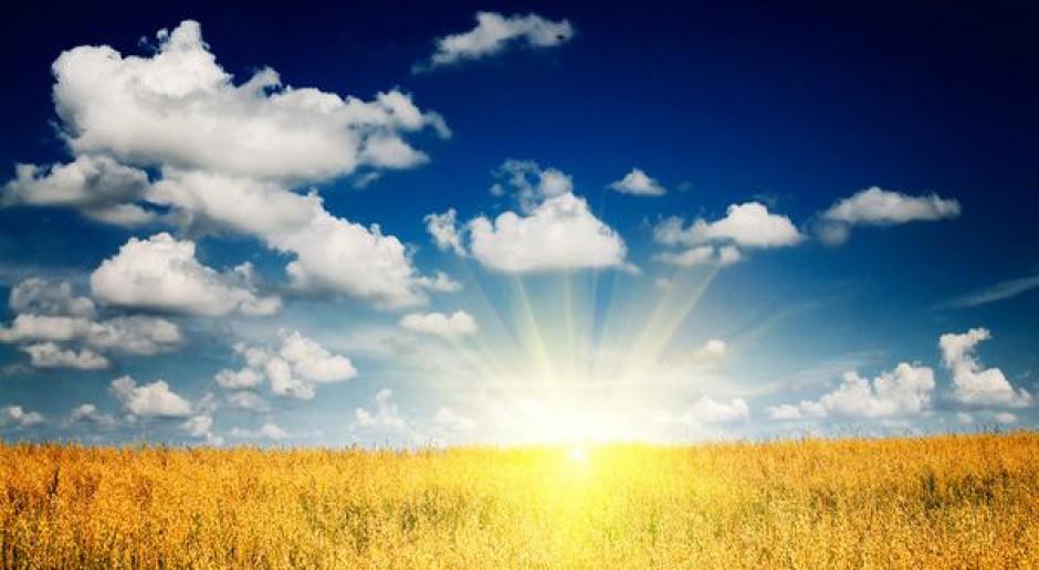 Zboża chronione przed suszą