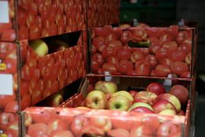 Polska może być światowym liderem w eksporcie jabłek