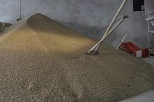 Spadki cen zbóż w skupach