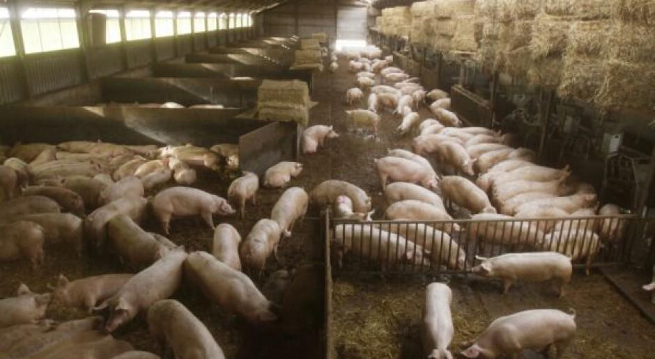 Blisko 5 mld USD wchłonie rosyjski sektor wieprzowiny