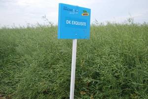 Na co stawia Monsanto