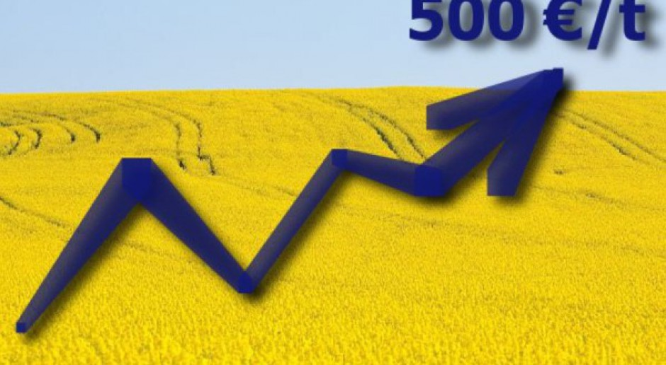 Rzepak powyżej 500 euro