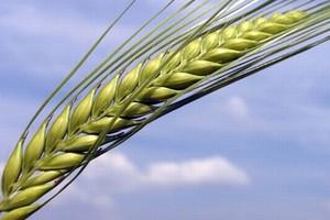 Potrzebna rezerwa nasion