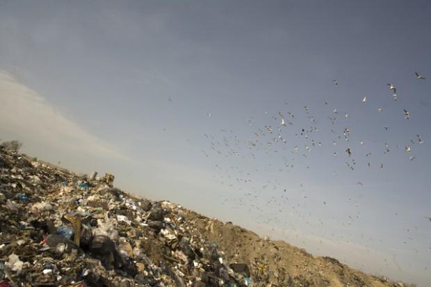Samorządowy bunt śmieciowy