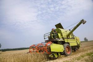 ARR prognozuje niższe zbiory zbóż