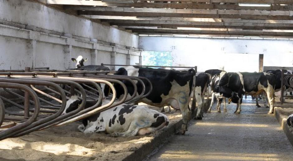 Dobrostan krów, cz II: Prawidłowe utrzymanie