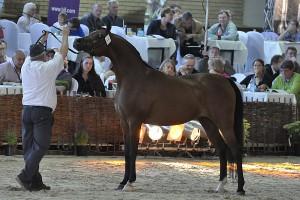 254 tys. euro za konie na Letniej Aukcji w Janowie Podlaskim