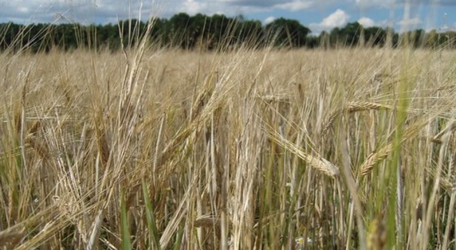 ANR daje korzystne warunki zakupu ziemi