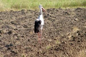 Rolnicy skorzystają na ochronie bocianich gniazd