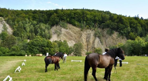 Jarzębina, Pesetka oraz Potencjał czempionami w Rudawce