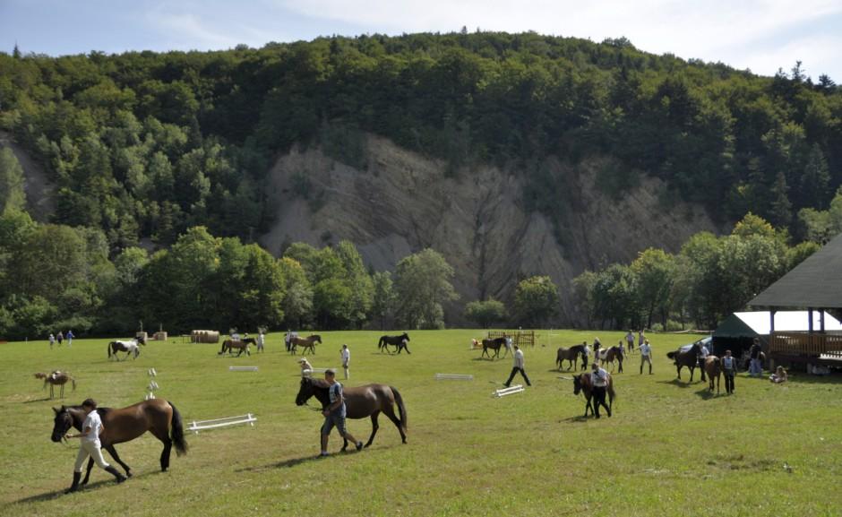 """Po raz kolejny w Rudawce Rymanowskiej odbył się regionalny czempionat koni huculskich. """"Farmer"""" przedstawia najpiękniejsze konie oraz tegoroczne czempiony."""