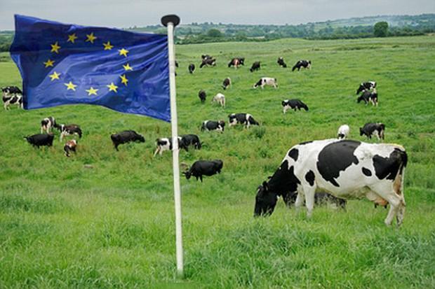 KE sfinansuje analizę rynku mleka